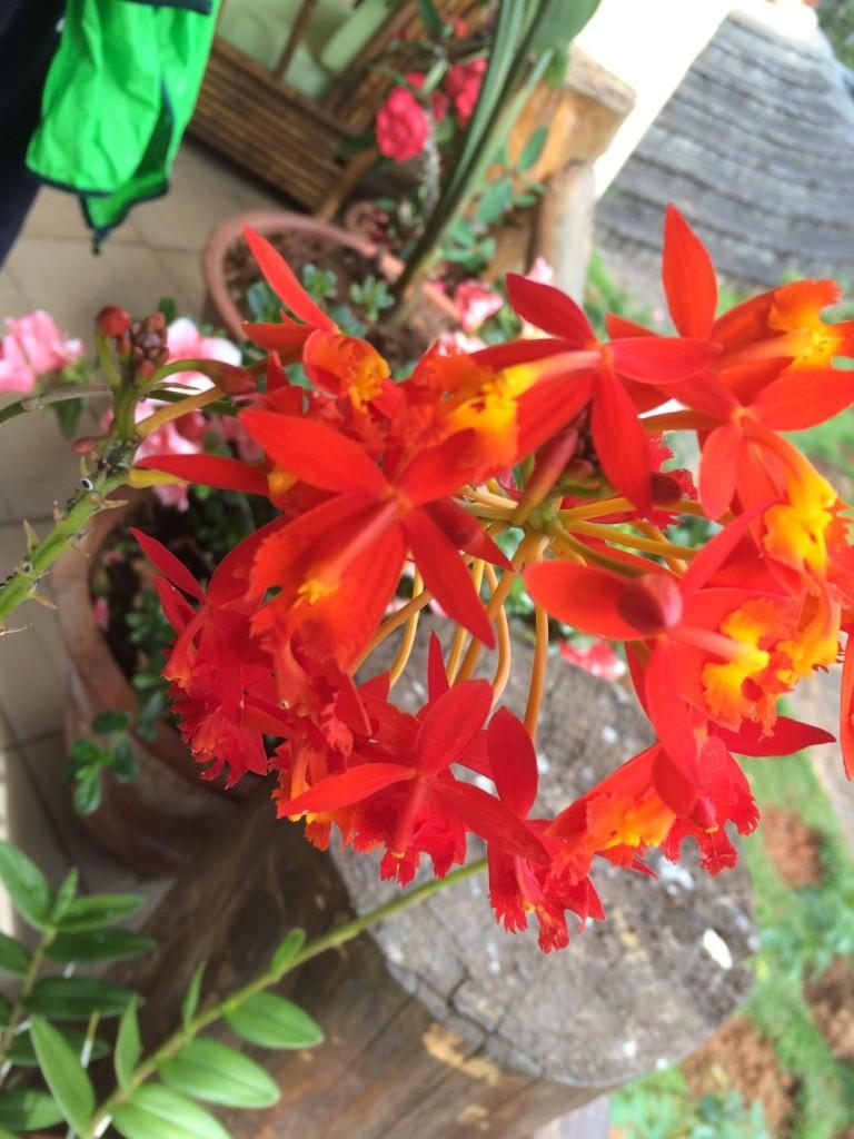 j4-dej-cristo-orchidee