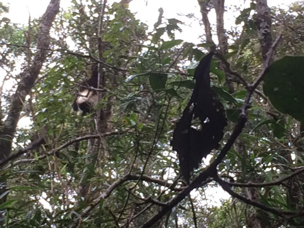 j4-lemurien-vari