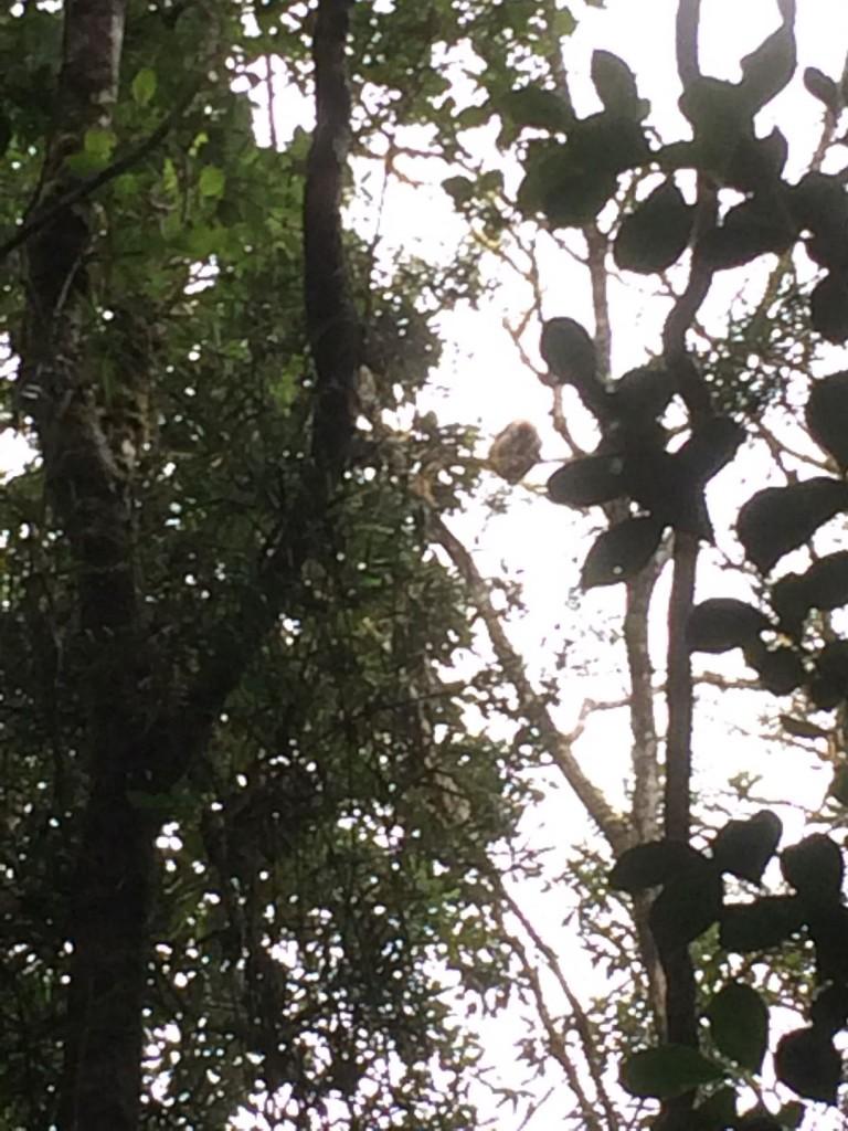 j4-lemuriens-dores