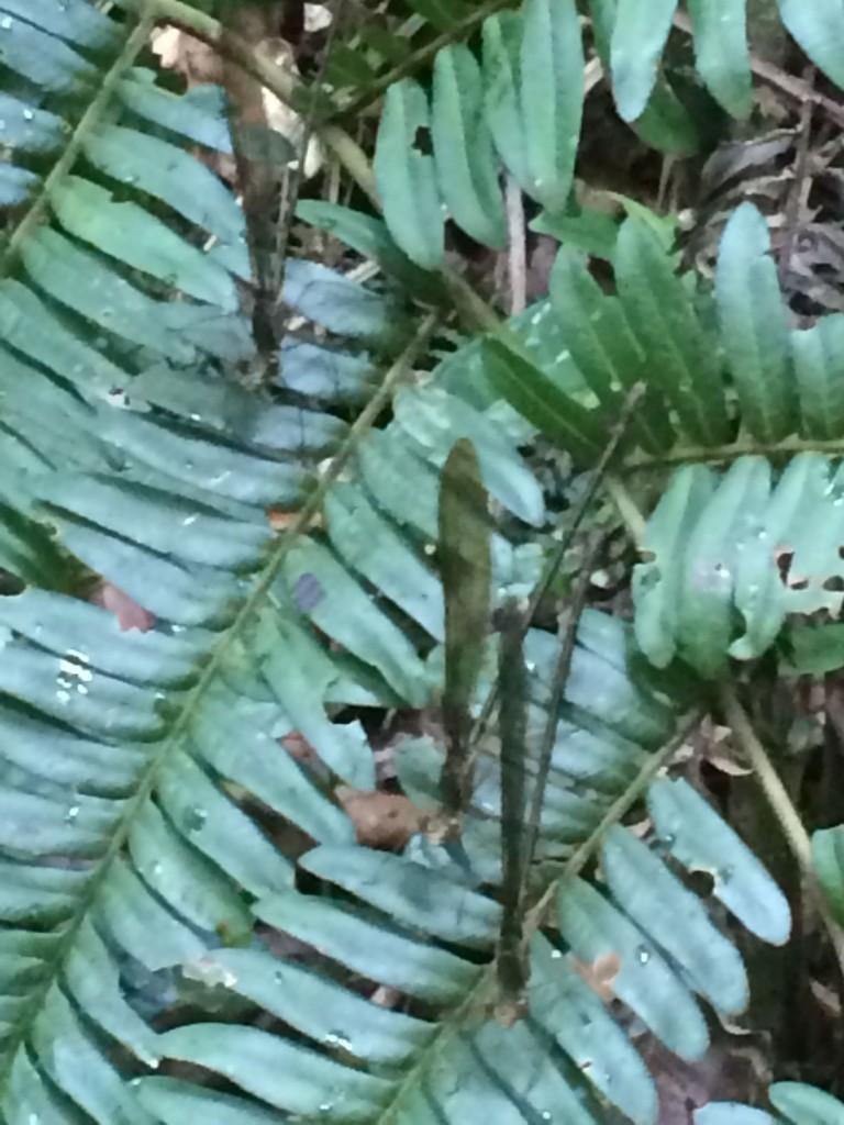 j4-libellules