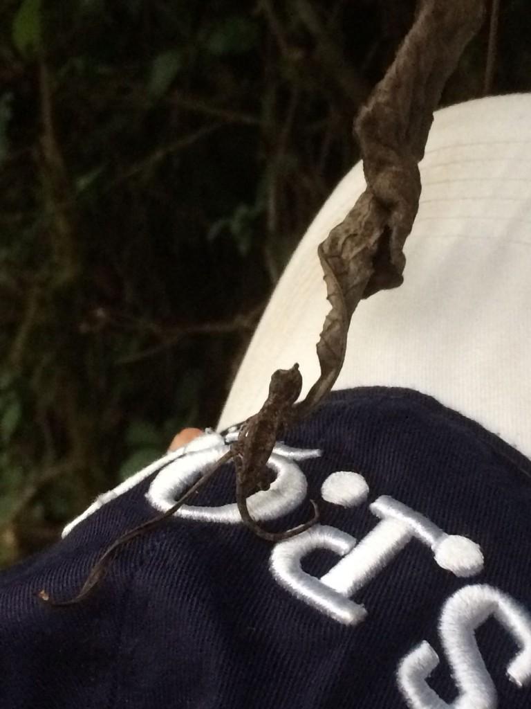 j4-nocturne-gecko
